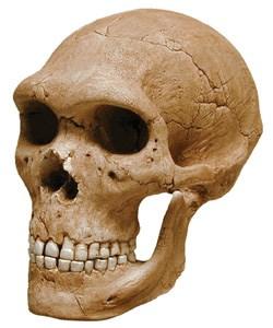 neandertal1