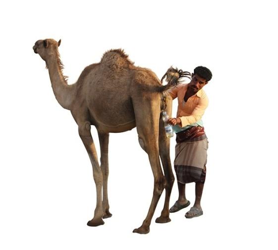 Urinoterapia in alcuni paesi islamici, nello Yemen in particolare