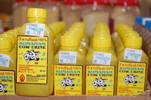 Urina di mucca in bottiglia in vendita come rimedio ayurvedico.