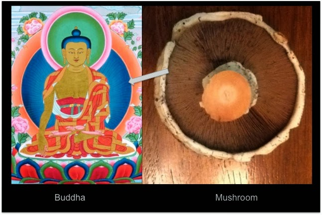 fungo buddha
