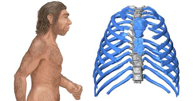 neanderthal-posture
